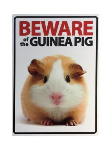guinea pig - Barbara Jacobs & Co property solicitors