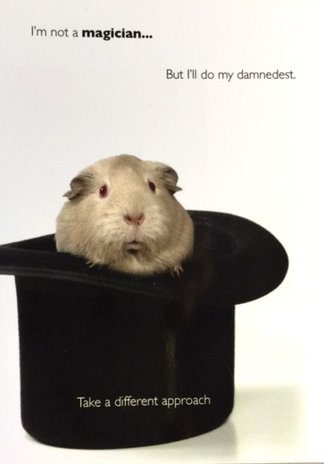 Guinea pig post card - Barbara Jacobs & Co property solicitors, York